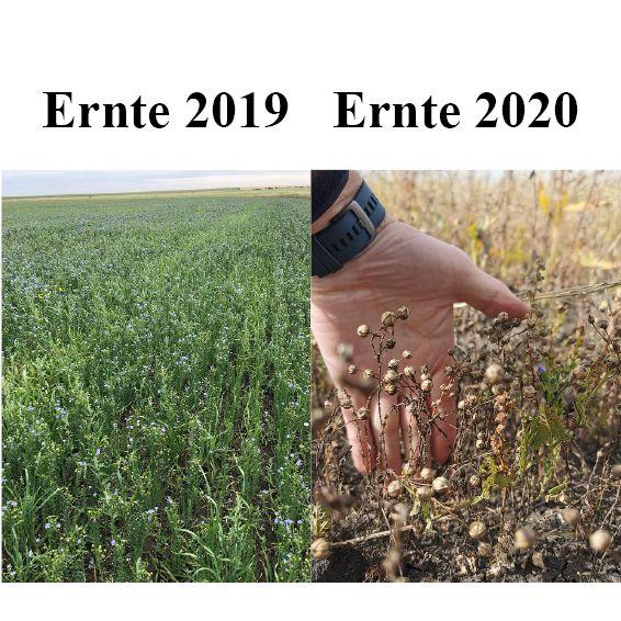 Ernteausfälle